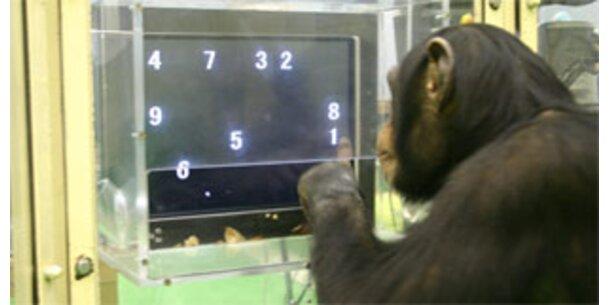 Schimpansen schlagen Studenten bei Computertest