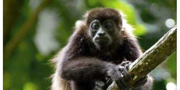Affe löst Panik am Flughafen in Neu-Delhi aus