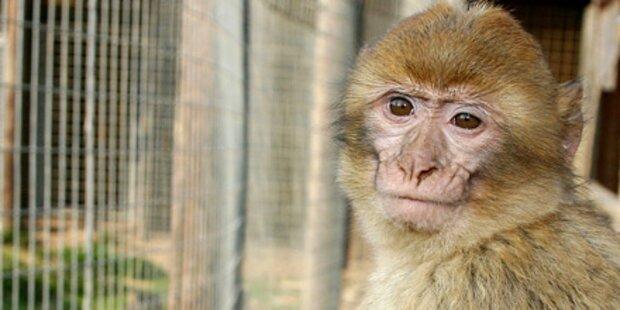 Affe beißt Bub Handnerv durch