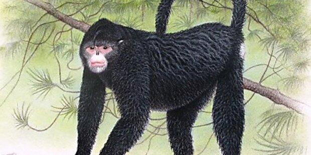 Affe sieht aus wie Elvis Presley