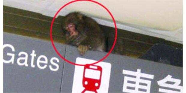 Affe überfiel U-Bahn Tokios