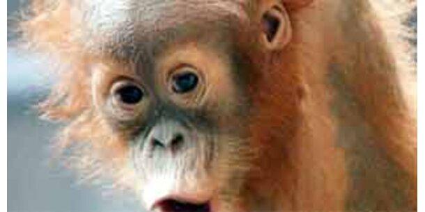 Geschlechtsspezifische Verhaltensweisen bei Affen