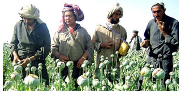 NATO geht aktiv gegen Drogen in Afghanistan vor