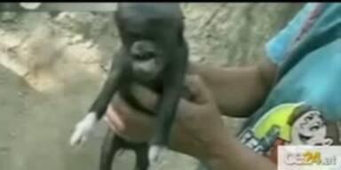 """Wirbel um """"Schweine-Alien"""" in Guatemala"""