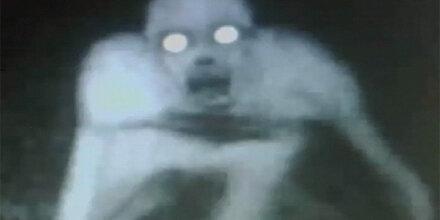 Jäger fotografierte mysteriöses Wesen