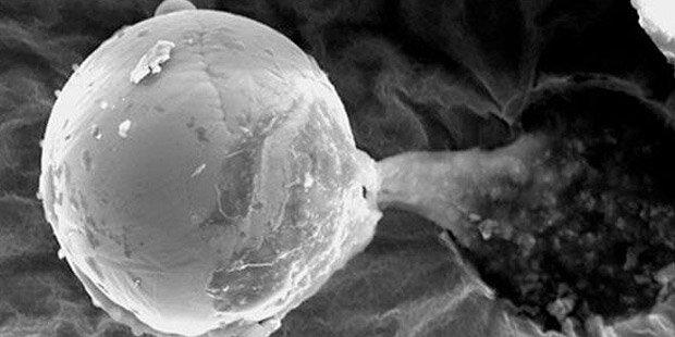Forscher: Aliens schufen unser Leben