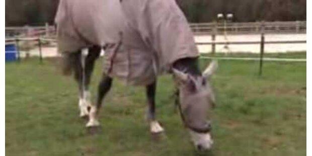 Pferd ist gegen Gras allergisch