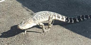 Alligator spazierte durch New York