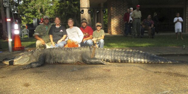 Familie erlegte 459 Kilo-Alligator