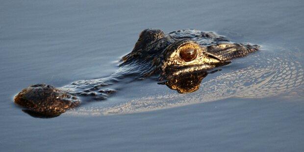 Verrückt: Alligator verbiss sich in US-Streifenwagen