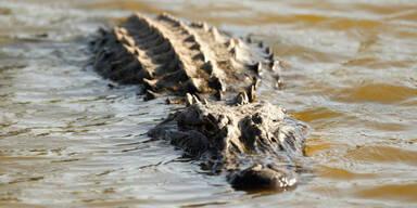 Alligatoren fressen Menschen auf