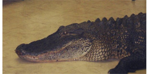 Frau in Florida fand Alligator in ihrer Küche