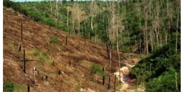 15 Indios im Naturreservat ermordet