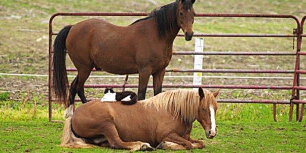 Pferd brutal gequält und verstümmelt
