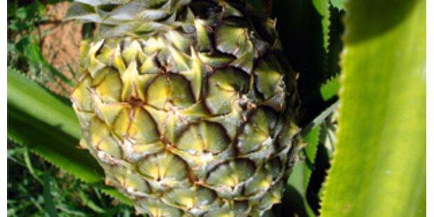Italienischer Minister riet von Ananas ab