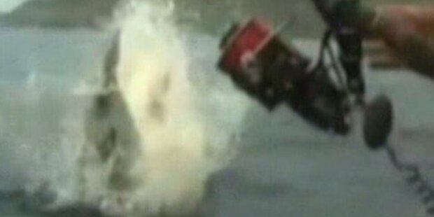 VIDEO: Hai jagt Angler Riesenschreck ein