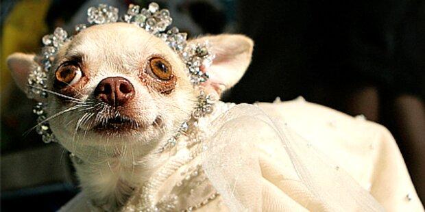 Fesche Wauwaus: Hunde als Fashionistas