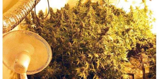 Drogen-Gewächshaus direkt neben dem Bett