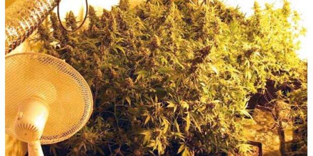 """36 Kilo """"Gras"""
