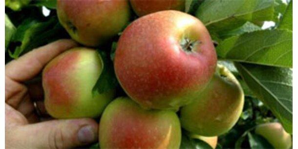 Kein AMA-Gütesiegel für hefebehandelte Äpfel