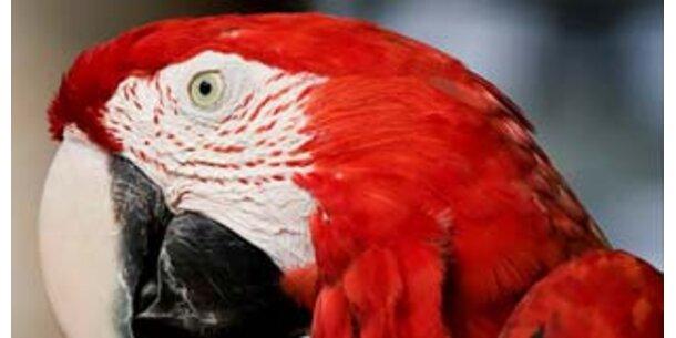 Papagei löst Puzzle schneller als Menschen