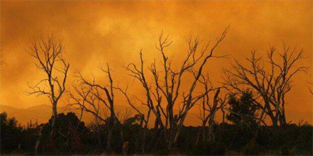 Waldbrand in Arizona weitet sich aus