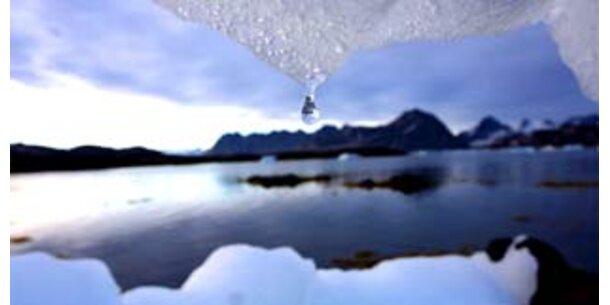 Arktis könnte in fünf Jahren eisfrei sein