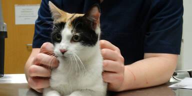 Junge Katze aus Autobahntunnel gerettet