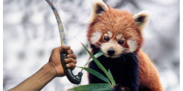Weiter Rätselraten um Nürnberger Panda-Morde