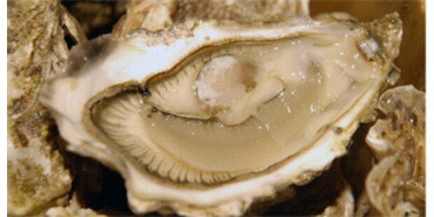 Mysteriöses Austernsterben bedroht Züchter