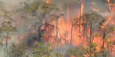 Buschbrände: Feuerhölle in Australien