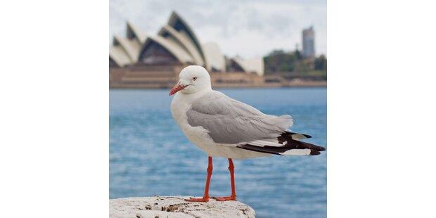 Auf nach Australien!