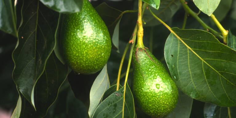Teure Avocados sorgen für Diebstahlwelle