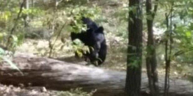 Wanderer von 150 Kilo-Bären zerfleischt