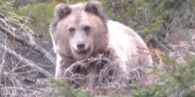 Wanderer traf auf Bär – so rettete er sich aus Gefahrensituation