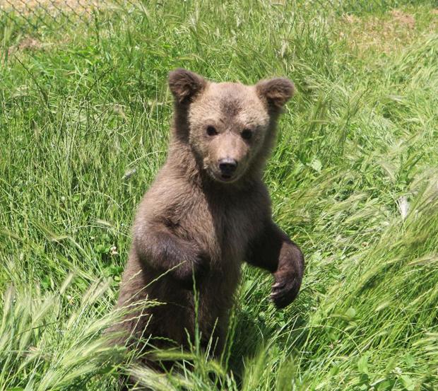 Bär Baby