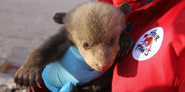Bären-Baby aus verdrecktem Keller im Kosovo gerettet