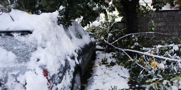 Unzählige umgestürzte Bäume in Salzburg