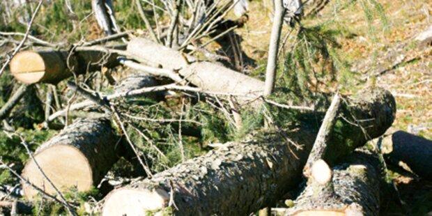 Baum überrollte 70-jährigen Bauern