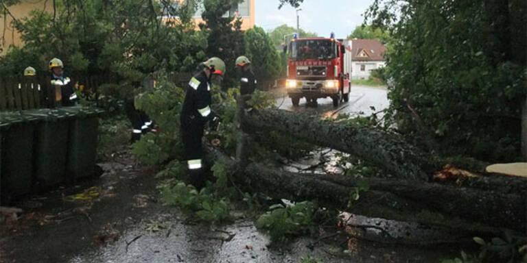 Sturmschäden in NÖ, Steiermark, Burgenland