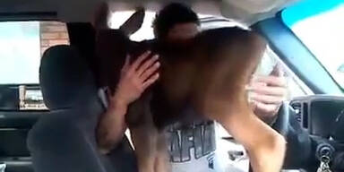 Autofahrer findet Elch-Baby