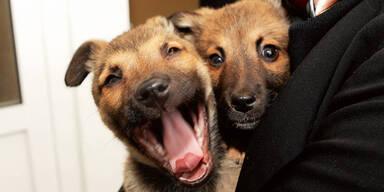 Hundebabies in der U-Bahn geschmuggelt Wien