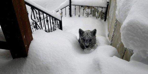 Bär stand im Schnee plötzlich vor der Tür