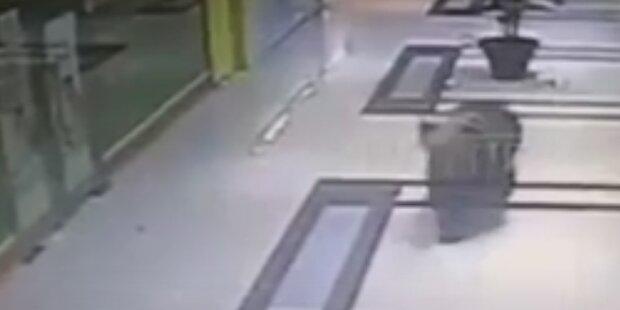Hungriger Bär macht Einkaufszentrum unsicher