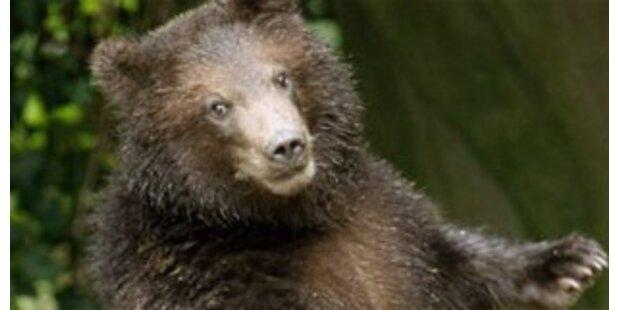 30 Bären zerfleischen zwei Russen