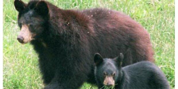 Schwarzbär fällt Frau in Kanada an