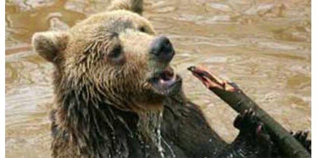 Hungriger Bär tötet rumänischen Bauern
