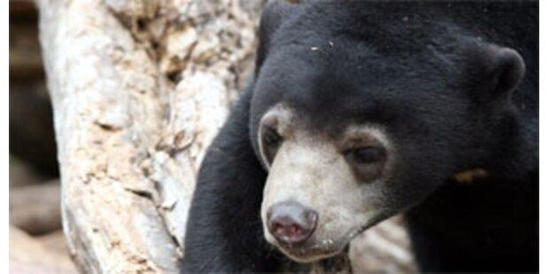 Leiche im Bärenkäfig im Belgrader Zoo
