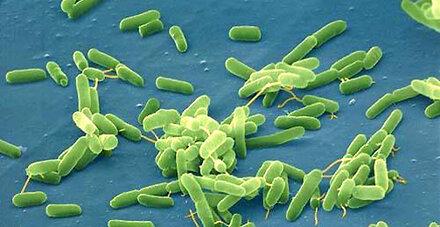 US-Forscher schaffen künstliches Bakterien-Genom