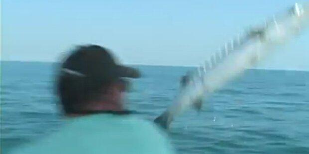 Barracuda attackiert Fischer auf Boot
